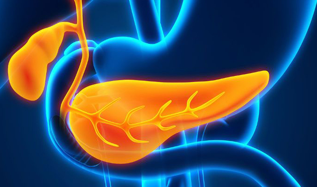 Drinker's nightmare: the curious case of the pancreas, an organ capable of destroying itself